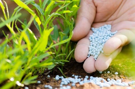 nutrición de cultivos con fertilizantes