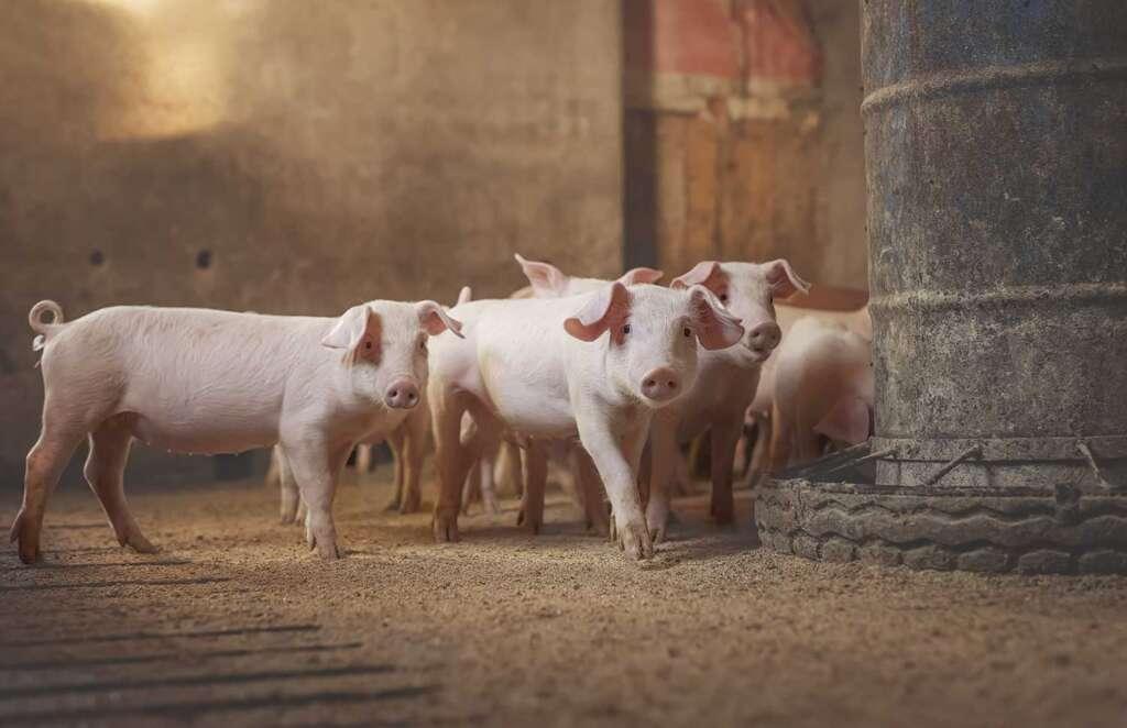 La salud animal y su importancia